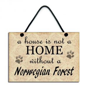 A house is not a home without a Norwegian Forest