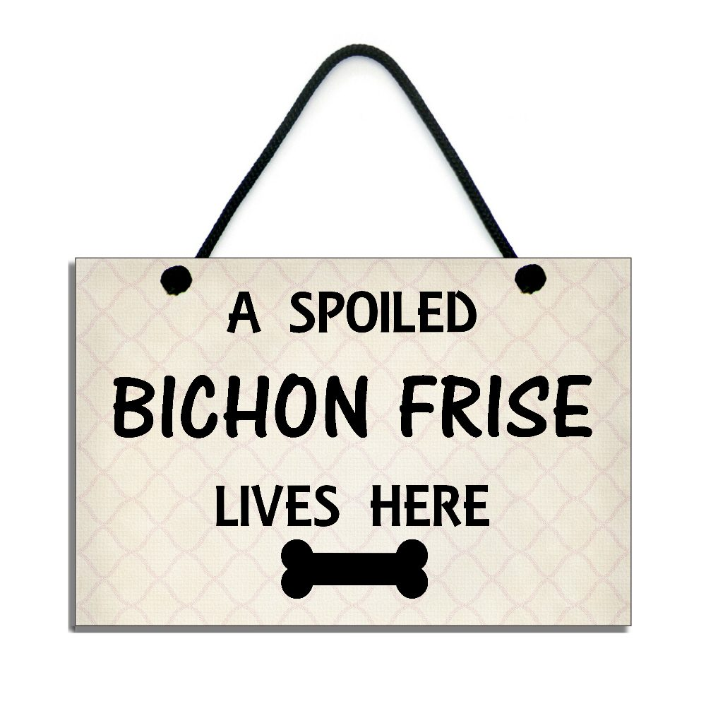 a spoiled bichon frise lives here